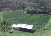 Pavas (la cumbre) vendo finca ganadera
