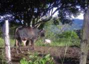 Finca de 5 fanegadas en tocaima para cultivo y ganaderia
