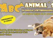 Abc animal`s clinica veterinaria