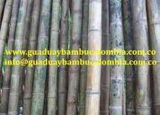Venta de guadua bambu avinagrada e inmunizada