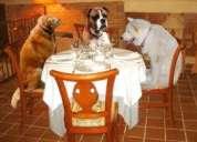 Guarderia canina medellin