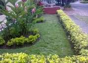 mantenimiento de jardineria