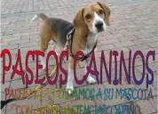 Paseamos y cuidamos a su mascota con amor, paciencia y cariÑo